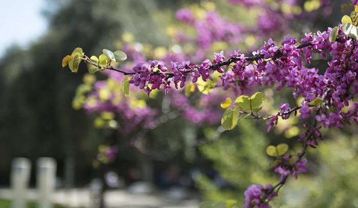 Primavera en Barcelona